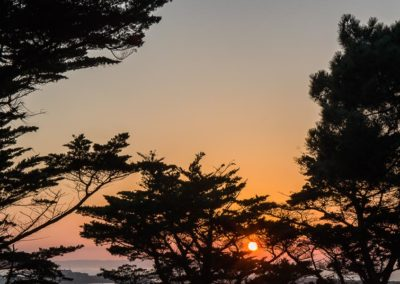 Sunset arborée