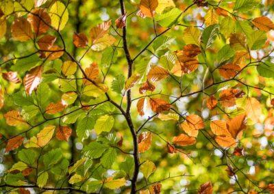 Mosaique de l'automne