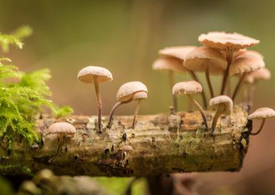 Communauté de champignons (2)