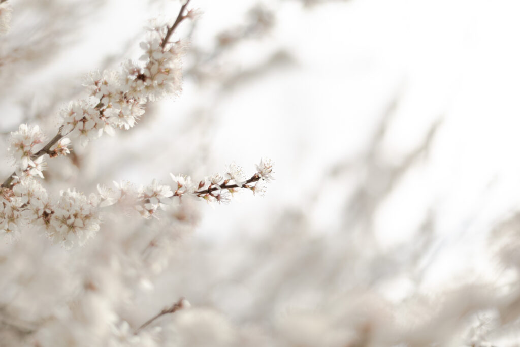 photographe-mariage-fleur-pauline Delaunay-Bretagne-2