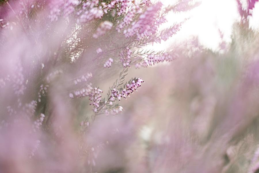 photographie-mariage-bruyere-pastel-lannion-bretagne
