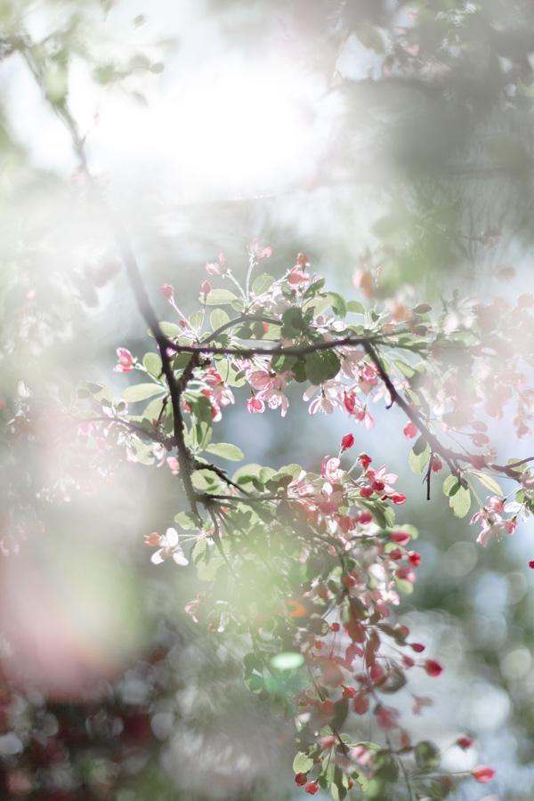 photographie-mariage-delicat-floral-lannion-bretagne